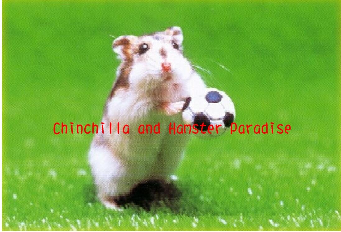 Www Sex Hamster De
